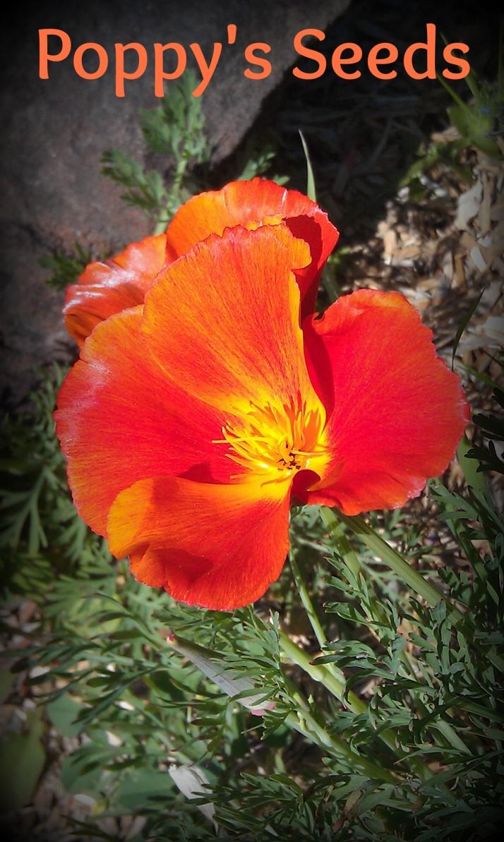 poppy's seeds